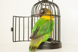 bird-cage-door-open-escape-photo-your-design-93980618